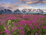 Wallpaperi Th_56488_Fields_of_Vetch0_Alsek_River_Valley6_British_Columbia5_Canada_122_193lo